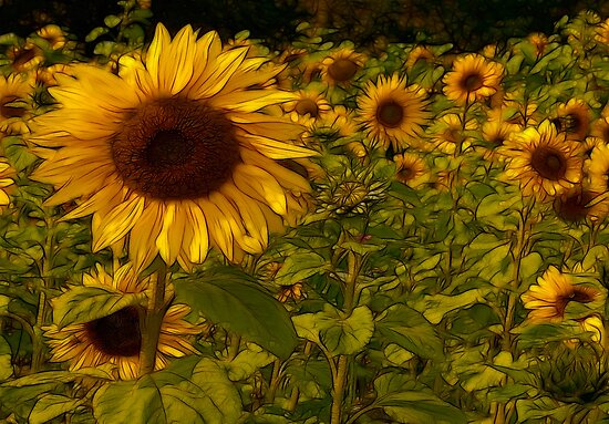 Fractual Sunflowers by Trevor Kersley