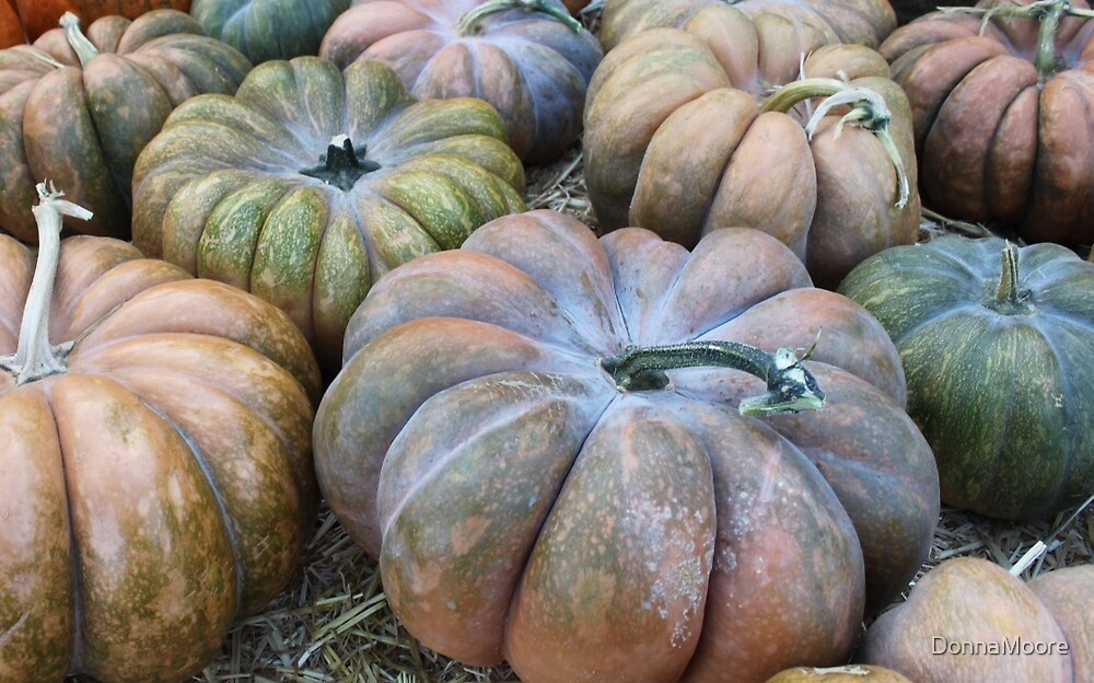 All the different pumpkins..... by DonnaMoore