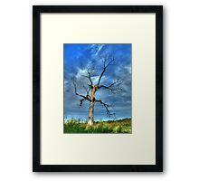 Tree Man of OZ Framed Print