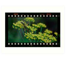 summer wasp Art Print
