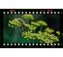 summer wasp Photographic Print