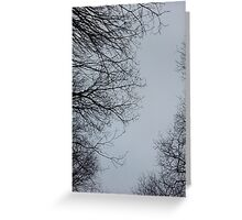 Winter Frosted Sky Greeting Card