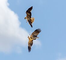 Fighting Kites by Teale Britstra