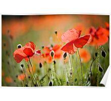 Dancing Poppies Poster