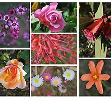 Collage of Flowers by bonhy