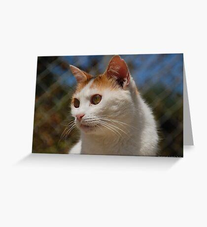 Tomasina stray Greeting Card