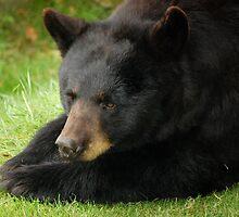 Beary Bored by Sandy Woolard