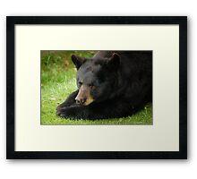 Beary Bored Framed Print