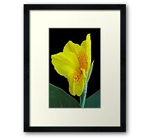 Wild Canna Lily Bloom Framed Print