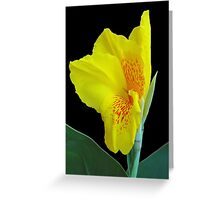 Wild Canna Lily Bloom Greeting Card