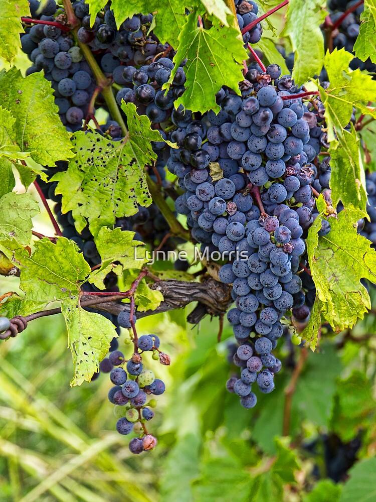 Ready For Wine by Lynne Morris
