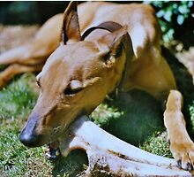 A dog with a bone by Lewis Lees