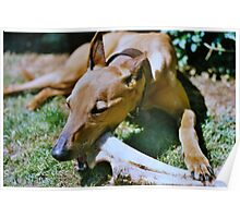 A dog with a bone Poster