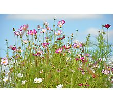 Cosmos in the Clouds... Photographic Print