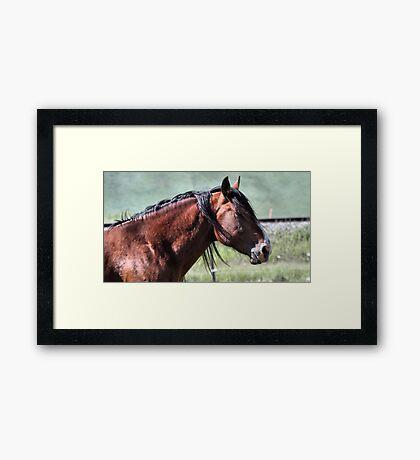 Wild Pride Framed Print