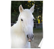 Rianna our rescue horse Poster