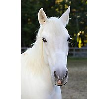 Rianna our rescue horse Photographic Print