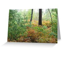 The woods in the autumn sun Greeting Card