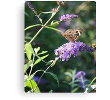 Butterfly Season - Common Buckeye 2 Canvas Print