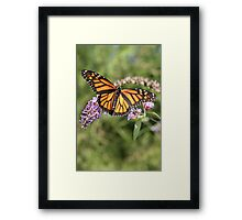 Butterfly Season - Monarch 2 Framed Print