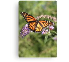 Butterfly Season - Monarch 2 Canvas Print