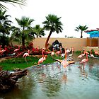Flamingos, Phoenix Zoo by Laura-Lise Wong