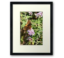 Butterfly Season - Great Spangled Fritillary 2 Framed Print