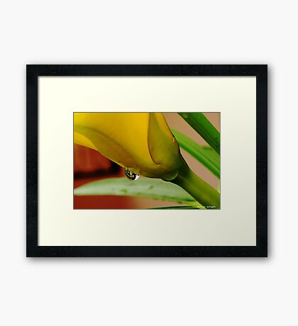 yellow flower with water drop Framed Print