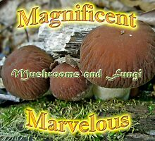 Calendar - Magnificent Marvelous Mushrooms and Fungi by MotherNature