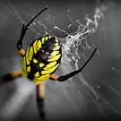 Black and Yellow by Christopher Gaines