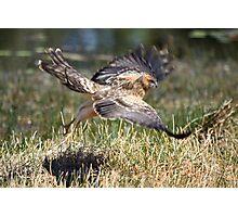 Raptor Motion Blur Photographic Print