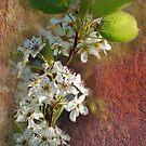 Plum Blossom by Eve Parry