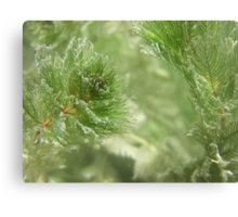 Christmas Weed  Canvas Print