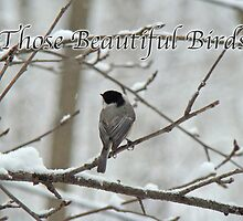Calendar - Those Beautiful Birds by MotherNature