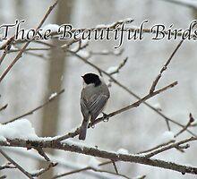 Calendar - Those Beautiful Birds by MotherNature