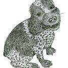 Cocker Spaniel Pencil Sketch by Jane McDougall