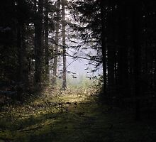 Forest pathway in morning lighting by Antanas