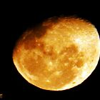 Orange Moon Rising by Julie Sleeman