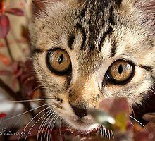 """Chocolat' the kitten by Neutro"
