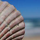 Shell on Sky by Carol James