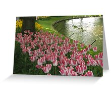 Tulips from Amsterdam Greeting Card