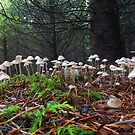 Mushrooms  by Charles & Patricia   Harkins ~ Picture Oregon