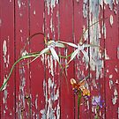 Longicordia Orchid with Red Painted Wall, native orchids of Western Australia. by Leonie Mac Lean