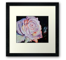 The most beautiful rose Framed Print