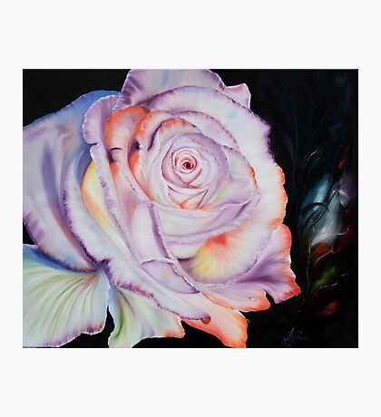The most beautiful rose Photographic Print