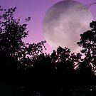 Sillouhette Moon by judygal