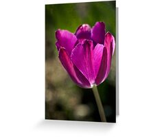 Early tulip Greeting Card