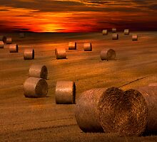 Harvest Sunset by Darren Burroughs