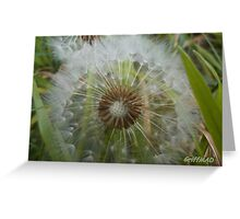 Dandelion Seed Head, Ripe for Blowing Greeting Card