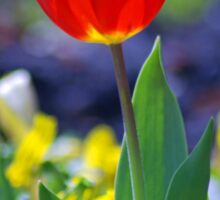 Sunny Tulip Sticker